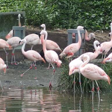 Amsterdam's zoo, Artis